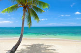 Tropisk strand, coconut palm — Stockfoto