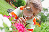 Boy, examining with a magnifying glass flower — Stock Photo