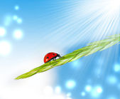 Ladybird on grass — Stock Photo
