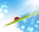 Mariquita sobre hierba — Foto de Stock
