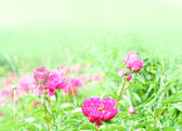 Spring Blooming in the Garden — Stock Photo