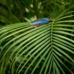 Blue Morpho Butterfly — Stock Photo #4254001