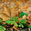 Yellow autumn leafs — Stock Photo