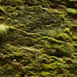 Moss background on the rock - Stock Photo