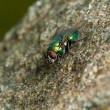 Fly on the stone — Stock Photo