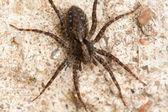 自然的蜘蛛 — 图库照片