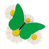 Mariposa verde con cuatro manzanilla — Foto de Stock