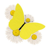 Yellow butterfly with four chamomile — Stock Photo