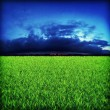 Green grassland on sunset — Stock Photo