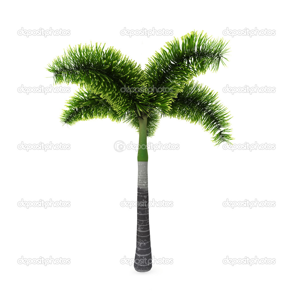 Palm tree isolated on white background — Stock Photo #3931865