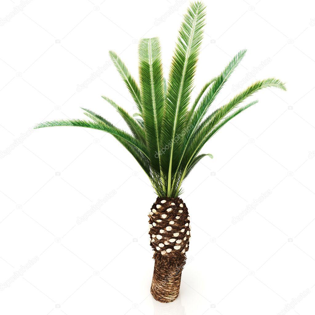 palm tree white - photo #28