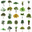 Perfect Group of Trees isolated on a white background. Twenty fi — Stock Photo