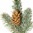 Golden pine cone — Stock fotografie