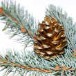 Gold pine cone — Stock Photo