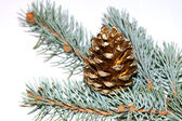 Gold pine cone — ストック写真