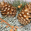 Two golden pine cone — 图库照片