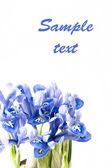 Blue irises — Stock Photo