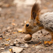 Stock Photo: Little squirrel eating nut in park at spring