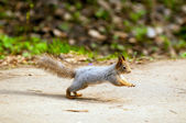Little squirrel in park at spring — Stock Photo