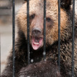 Young sadness brown bear in winter zoo - Stock Photo