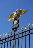 Dubbelkoppige adelaar — Stockfoto
