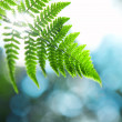 Fern branch - Stock Photo