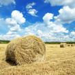 Hay roll — Stock Photo #3996830