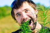 Young man in the bush of cannabis — Stock Photo