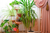Houseplants — Stock Photo