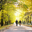 Couple walks down the park alley - Stock Photo