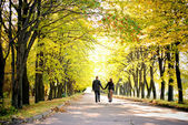 Couple walks down the park alley — 图库照片