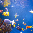 Aquarium close up — Stock Photo