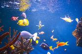 水族館をクローズ アップ — ストック写真