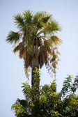 Palm — Stock Photo