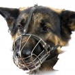 Stock Photo: Muzzle dog on white background