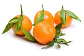 Mandarin on white close up — Stock Photo