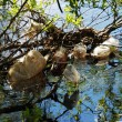 Trash in the river — Stockfoto