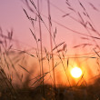 Sunrise over wavy grass — Stock Photo #4526374