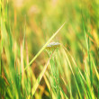 Photo bright green grass — Stock Photo