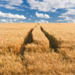 Royalty-Free Stock Photo: Road in field