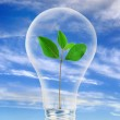 Light bulb with plant inside of it. — Stock Photo #4245526