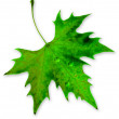 Green Leaf — Stockfoto #4300569