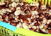 Mushrooming — Stock Photo