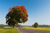 Beautiful fall scene on curved road with colorful leaves on tree — Stock Photo