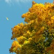 Warm colors of autumn. Yellow leaves covering a tree. - Stock Photo
