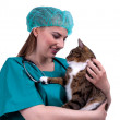 Stock Photo: Vet with cat in surgery
