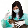 Woman vet with cat in surgery — Stock Photo