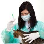 femme vétérinaire avec chat en chirurgie — Photo