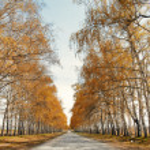 Road to the autumn — Stock Photo