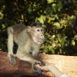 Contact with monkey - Stock Photo